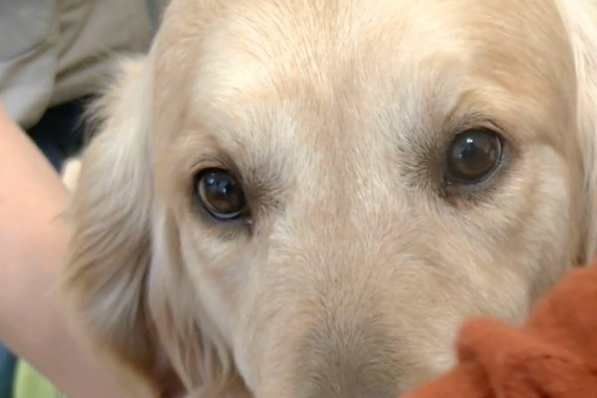 La terapia con perros del Hospital de Torrejón reduce la medicación por depresión