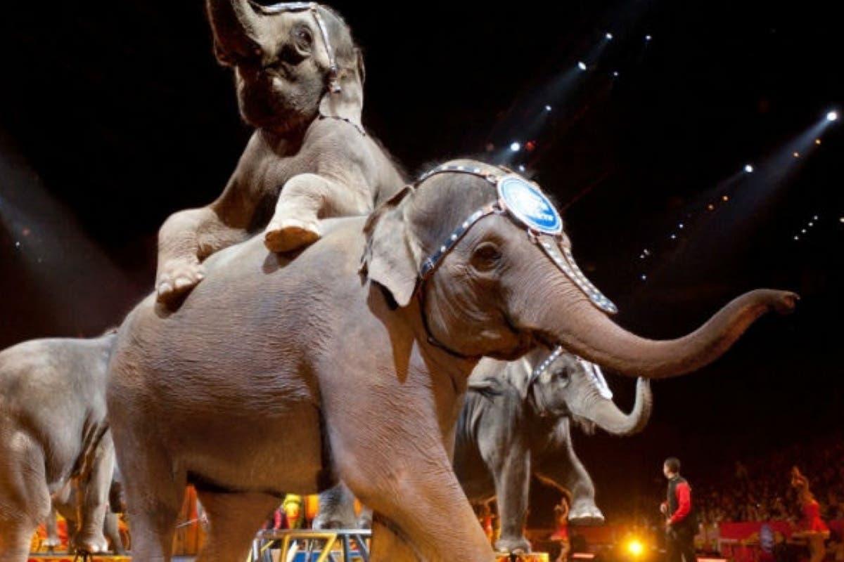 Guadalajara prohíbe los circos con animales y peligra el futuro del Zoo