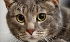 Arganda amplía las zonas para poder gestionar más colonias de gatos
