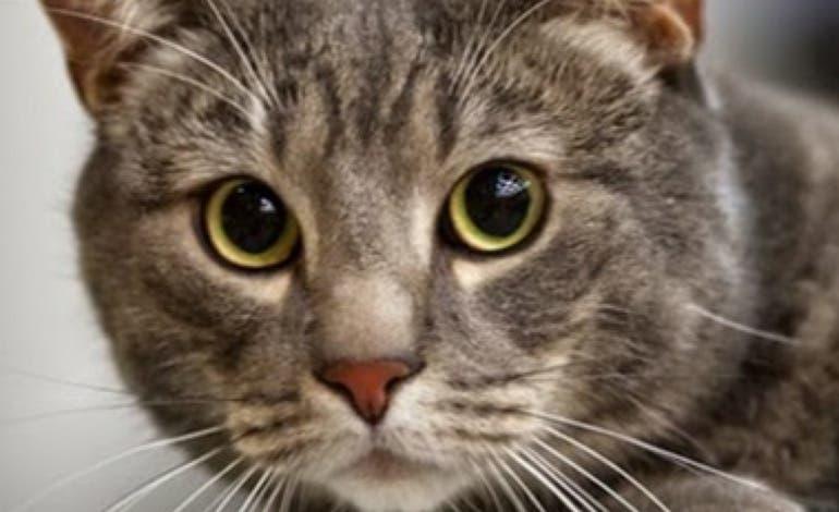 El Pleno de Coslada aprueba controlar y proteger las colonias de gatos callejeros