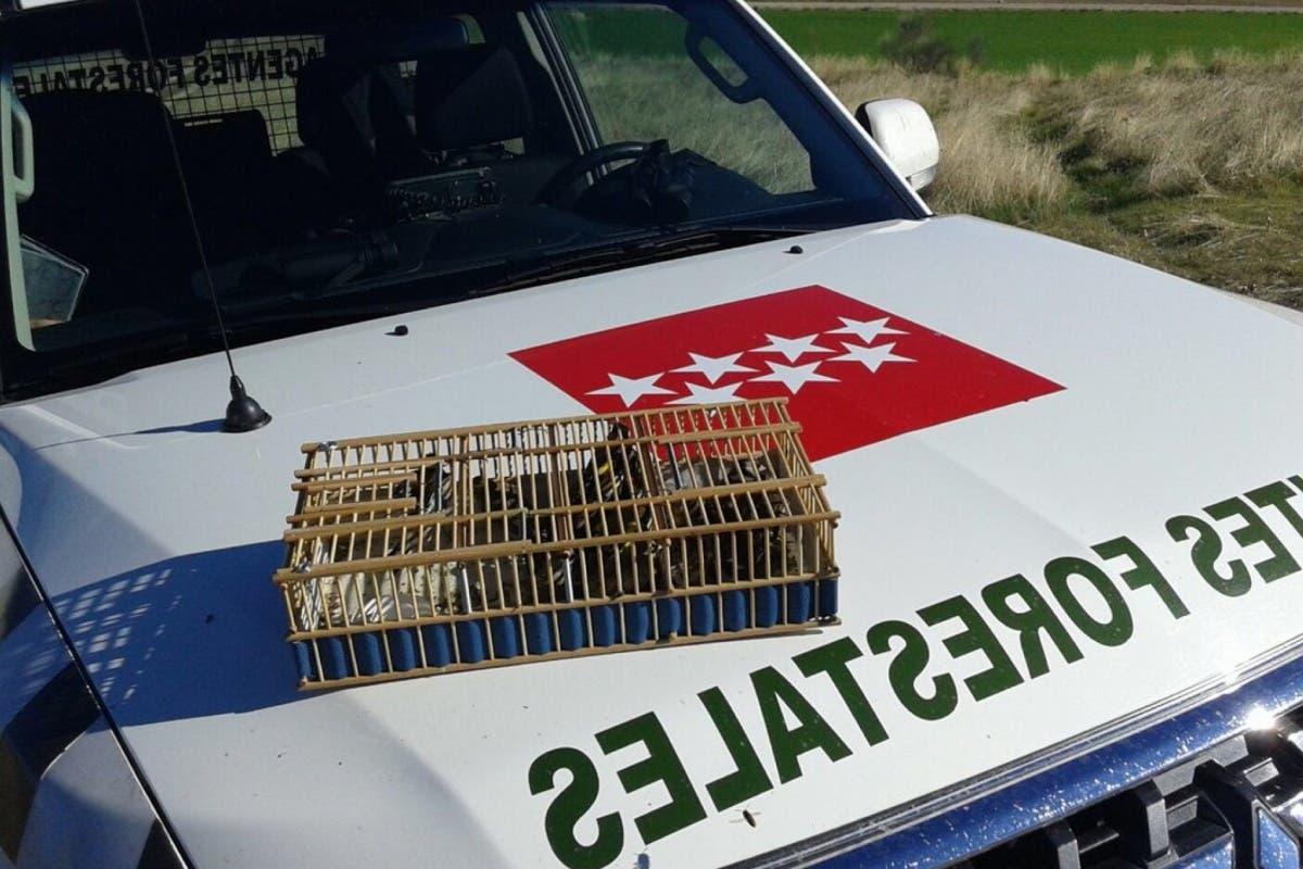 Denuncian a un cazador en Paracuellos por superar el número de pájaros capturados