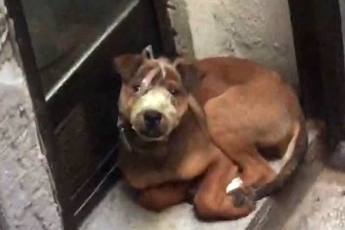 Rescatan a un cachorro amordazado en la terraza de una vivienda en Madrid