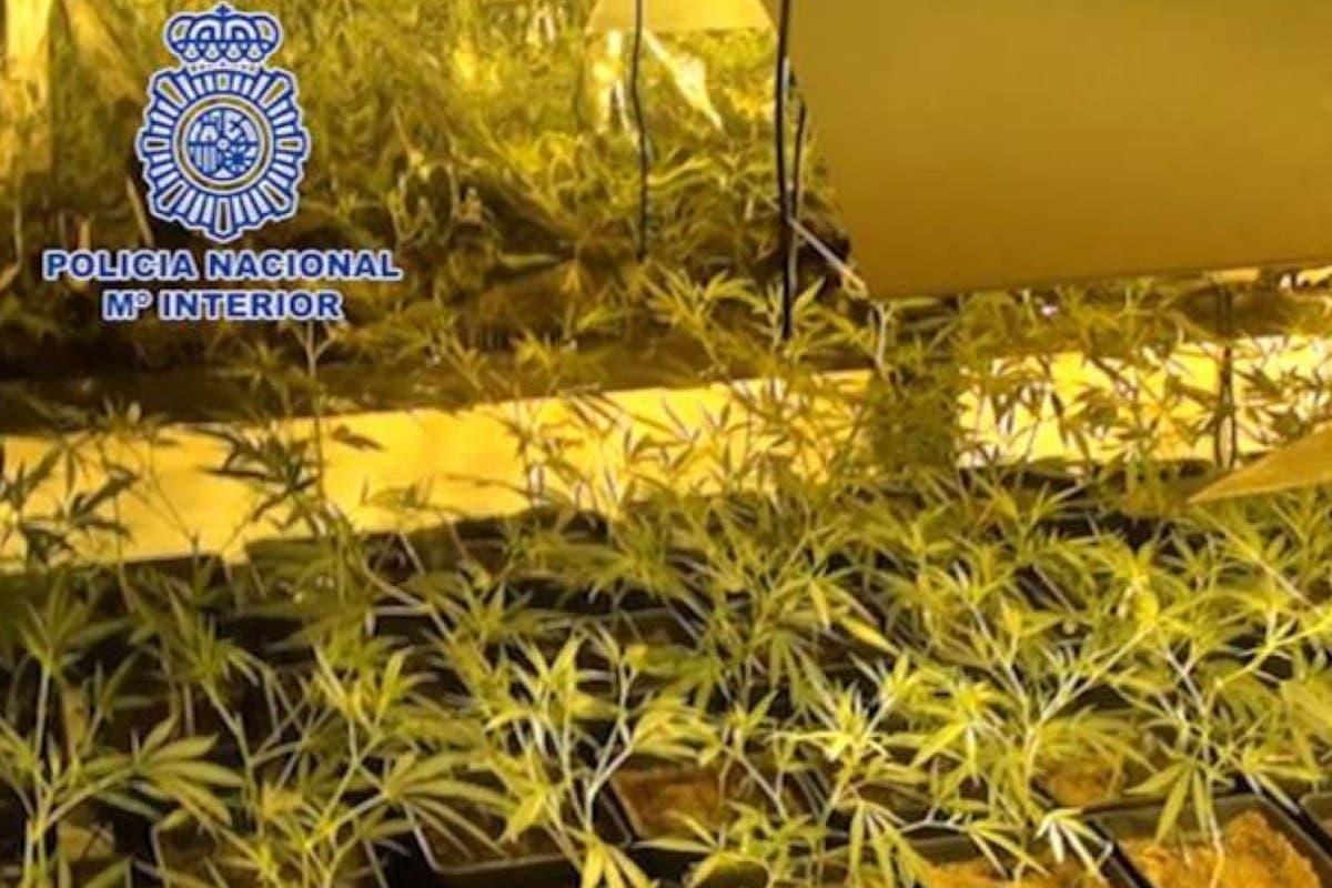 Operación contra el cultivo y venta de marihuana en Alcalá y el Corredor del Henares