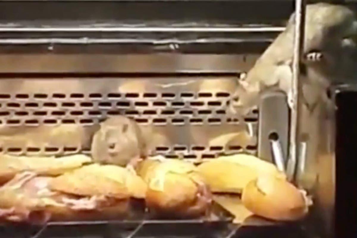 Novedades sobre el caso de las ratas encontradas en una panadería Granier