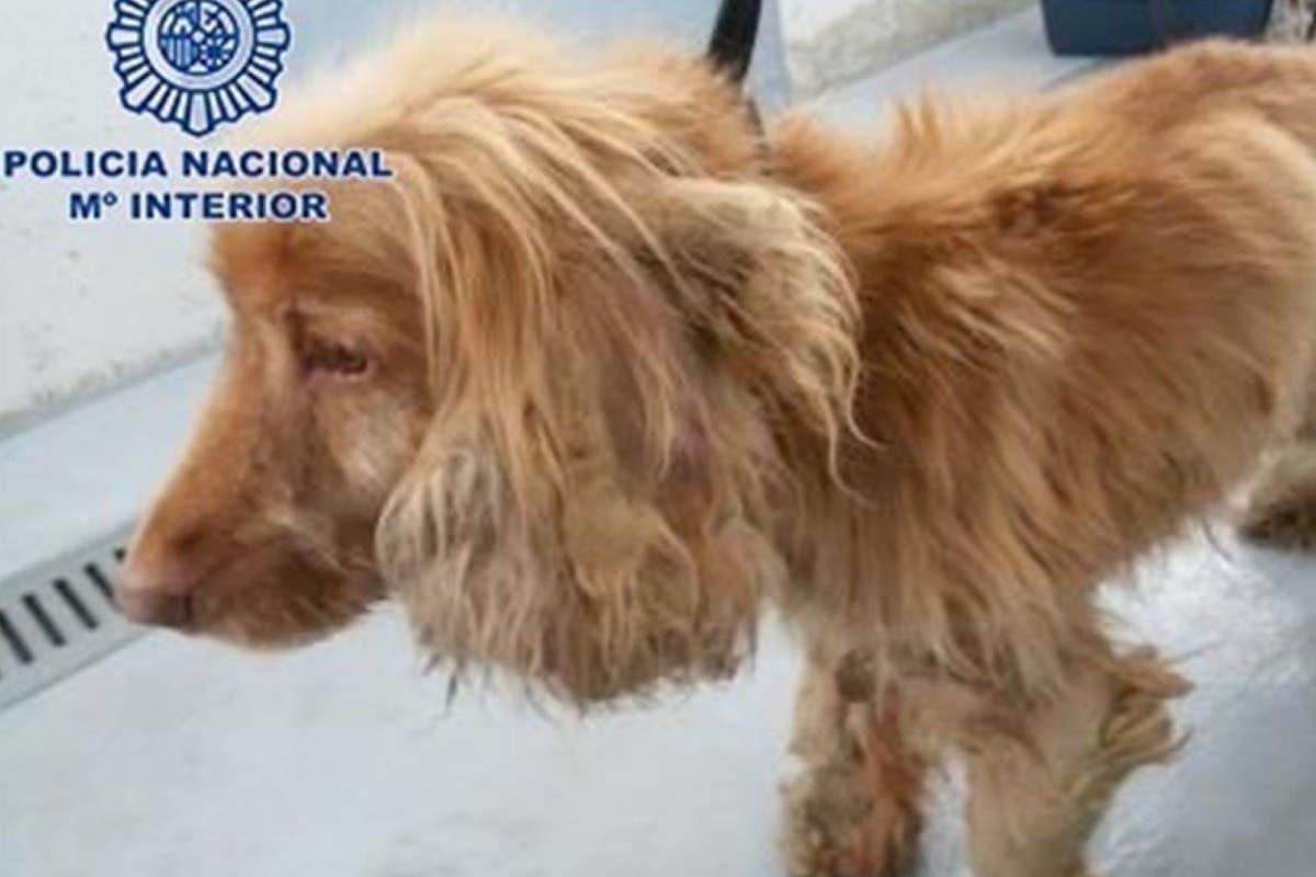 Un policía adopta a Lucky, tras encontrarlo desnutrido en un piso del barrio Salamanca