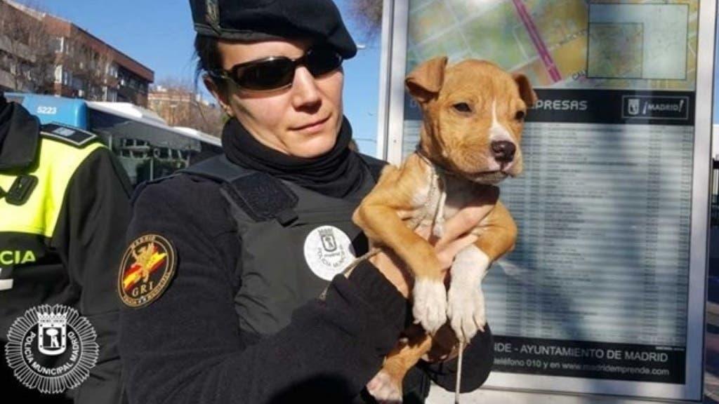 perro rescatado .001