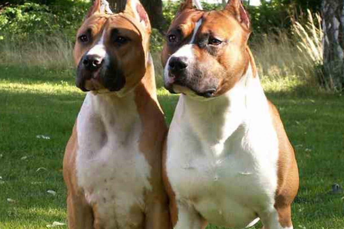 Guadalajara: Denunciado por llevar 2 perros «peligrosos» sueltos y sin bozal