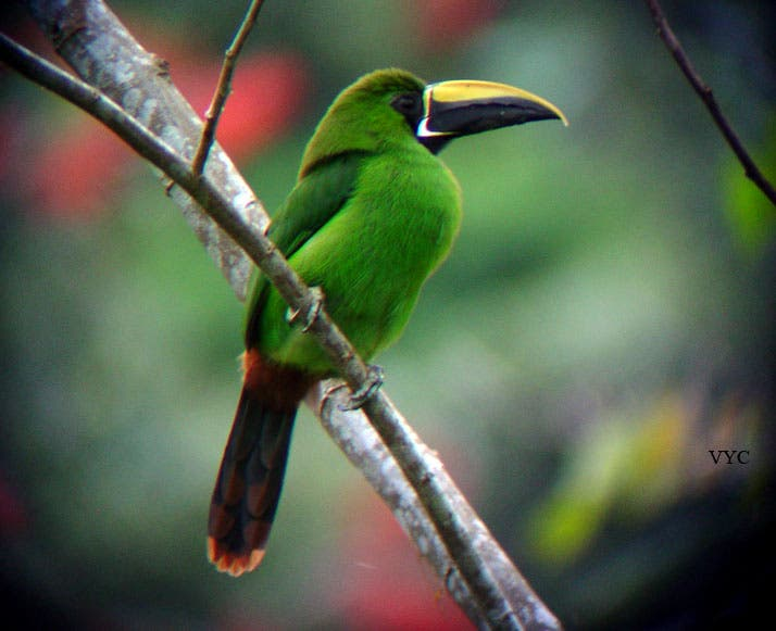 Incautan en Barajas 120 aves protegidas, 52 ya muertas