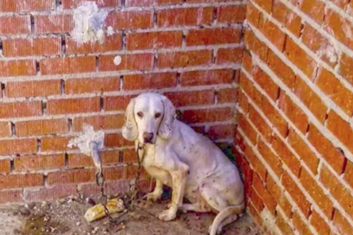 Piden 40 años de prisión para un cazador acusado de maltratar a 54 perros