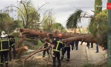 El fuerte viento provoca algunas incidencias en Alcalá y Coslada