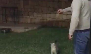 La Policía busca al autor de esta brutal agresión a un gato
