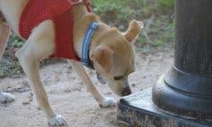 Alcalá de Henares impone el ADN canino y la limpieza de orines
