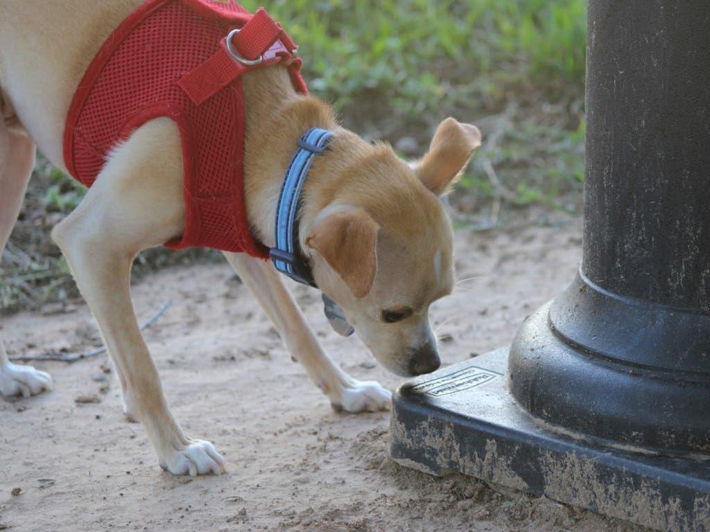 El Pleno de Alcalá de Henares aprueba el ADN canino