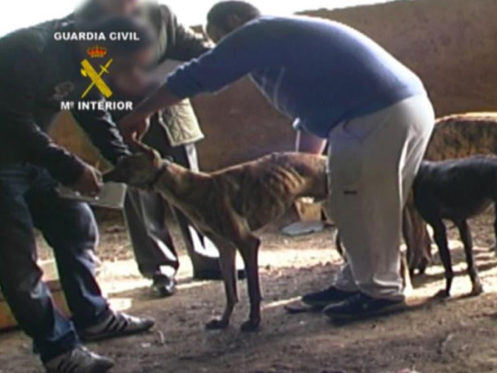 Cae una banda que robó tres perros galgos en Torrejón