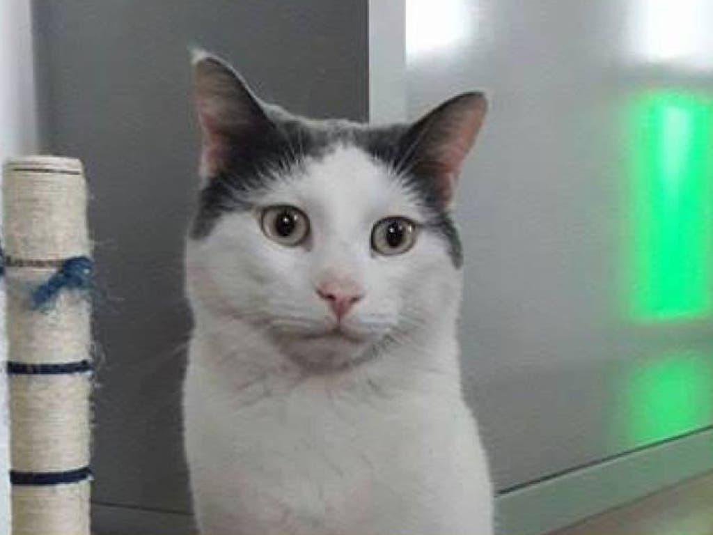 El gato más buscado de Torrejón