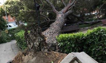 En San Fernando de Henares los árboles «se caen por todas partes»