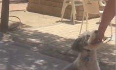 Un hombre trata así a su perro en plena calle, en Alcalá de Henares
