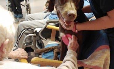 Tina, la perrita que ayuda a los mayores con Alzheimer de Guadalajara