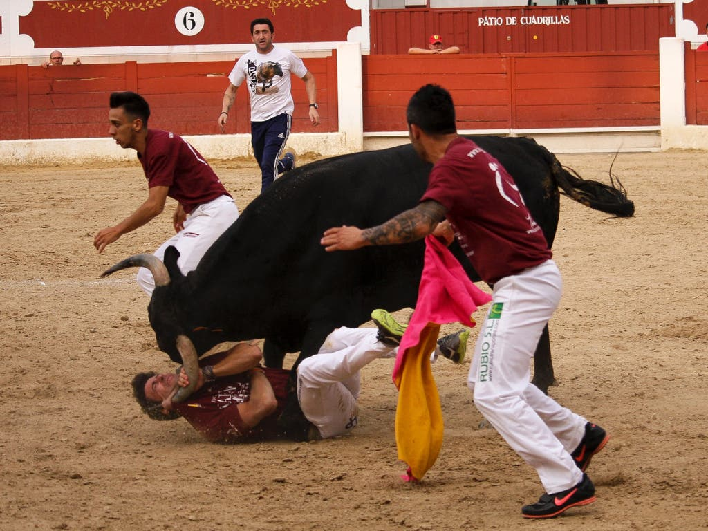 El recortador de Arganda, Peta, recibe dos cornadas en Torrejón