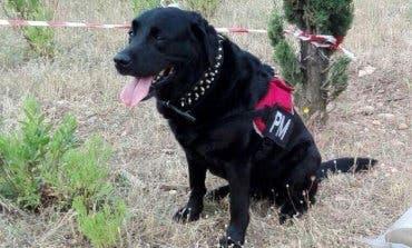 Piden homenajear a la perra que evitó una tragedia en Alcalá de Henares