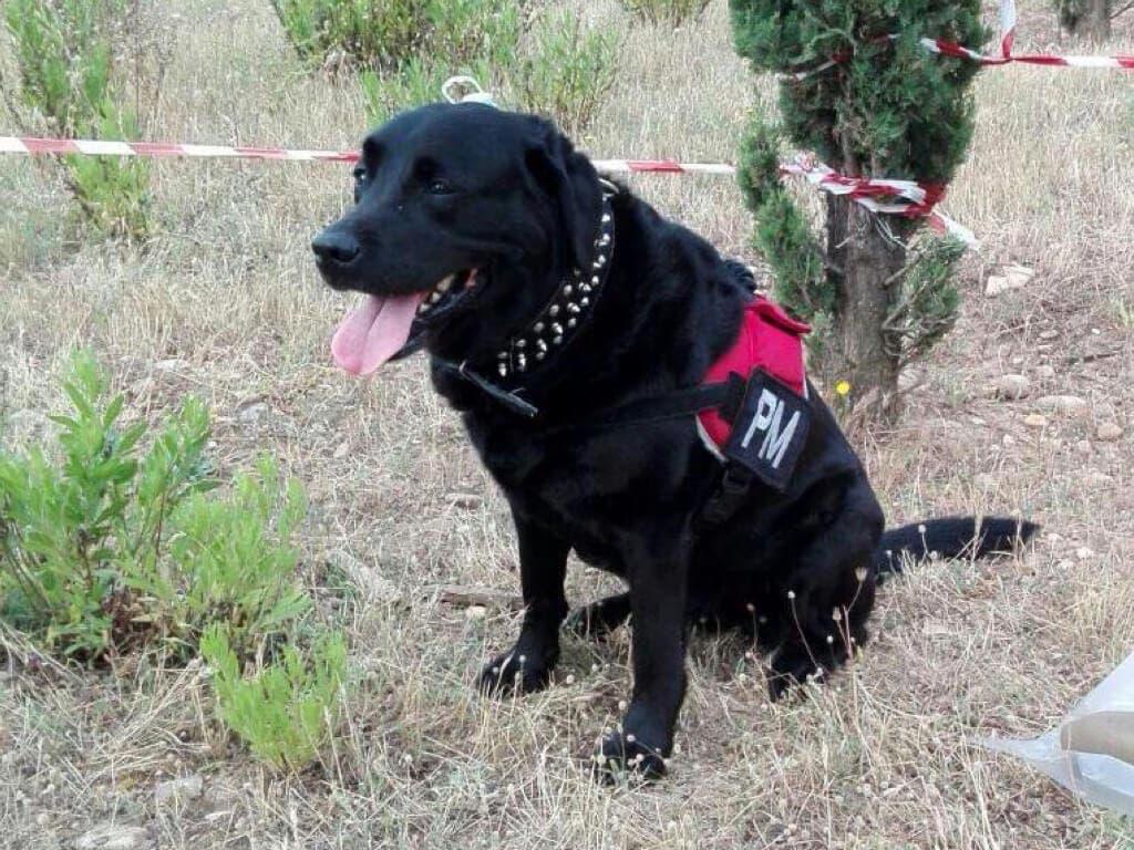 Runa, la perrita que evitó una masacre en Alcalá de Henares