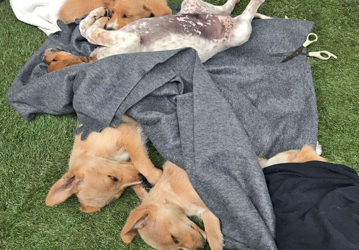 Consiguen hogar los cachorros rescatados de la basura en Cabanillas