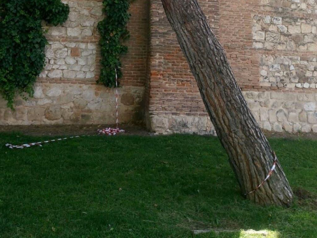 Alcalá tala varios árboles inclinados por la tormenta