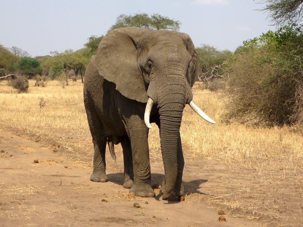 Muere un turista de Guadalajara atacado por un elefante en Etiopía