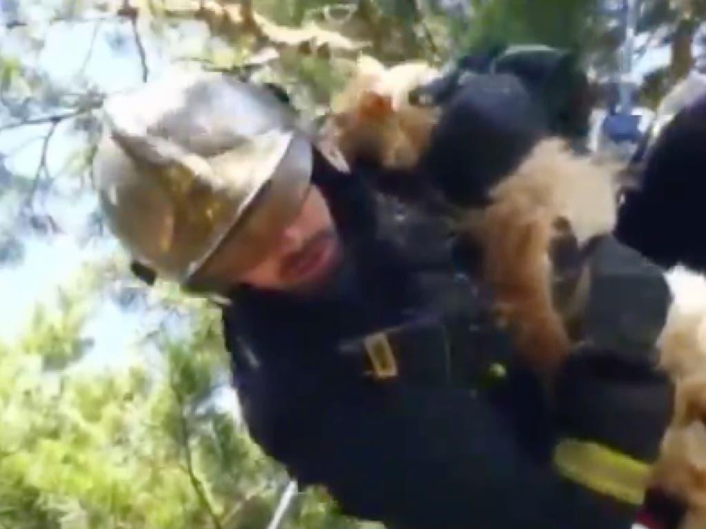 Los Bomberos rescatan a un gato atrapado en un árbol