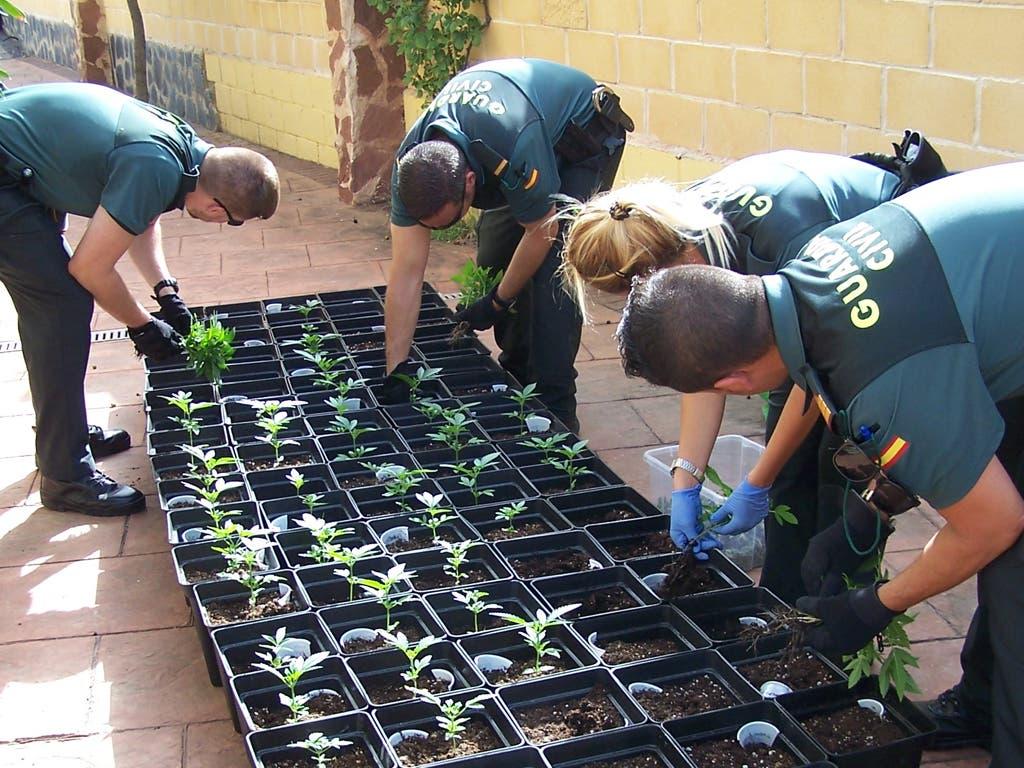 Dos detenidos por tráfico de drogas en Camarma de Esteruelas