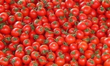 Se busca el tomate más grande de Paracuellos