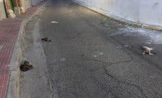 Aparecen tres gatos muertos en plena calle en Loeches