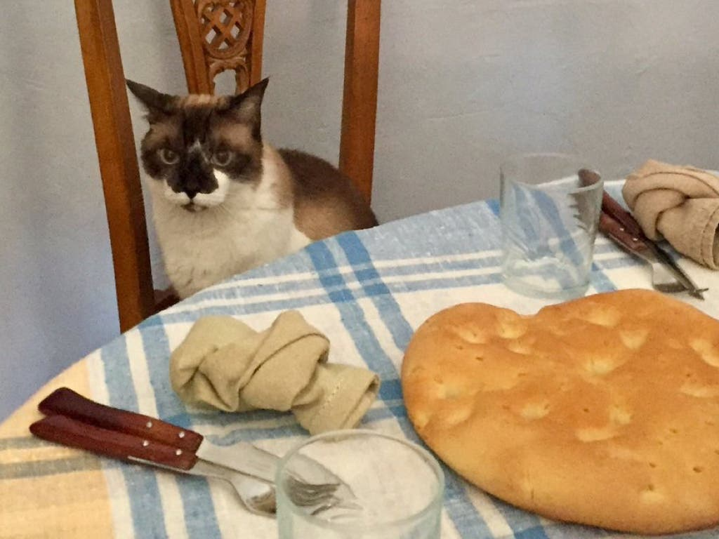 Lucas, el «gato alcalde» de Alcalá de Henares
