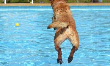 Perros al agua en Daganzo y fiesta hawaiana en Paracuellos para cerrar las piscinas de verano