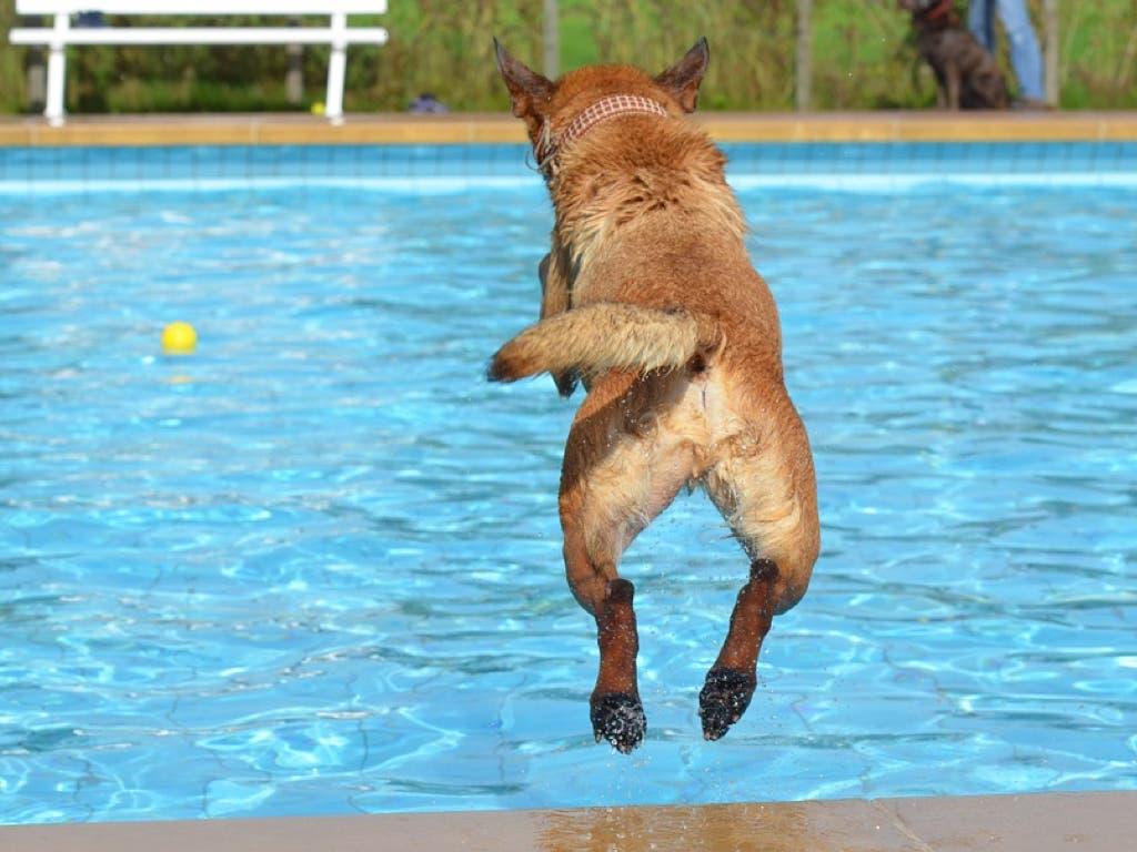 Daganzo organiza un día de piscina para perros