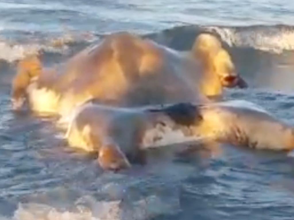 Una vecina de Torrejón no se podía creer lo que vio en la playa