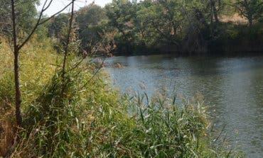 Alcalá crea un vivero para repoblar la ribera del río Henares