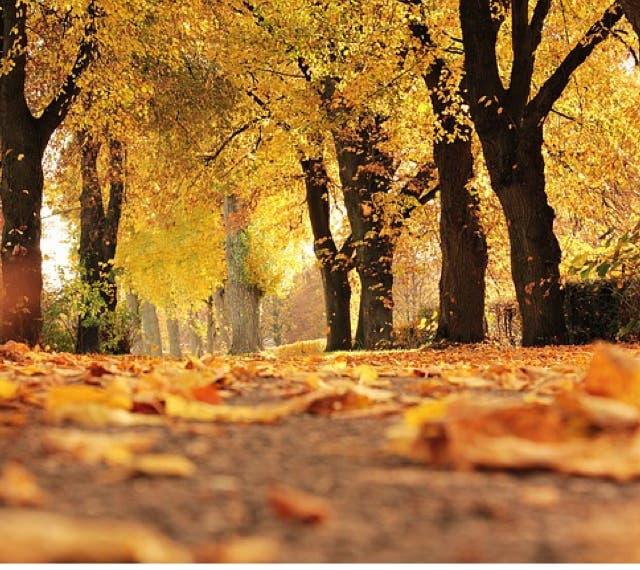 El otoño será más cálido y más húmedo en la Comunidad de Madrid