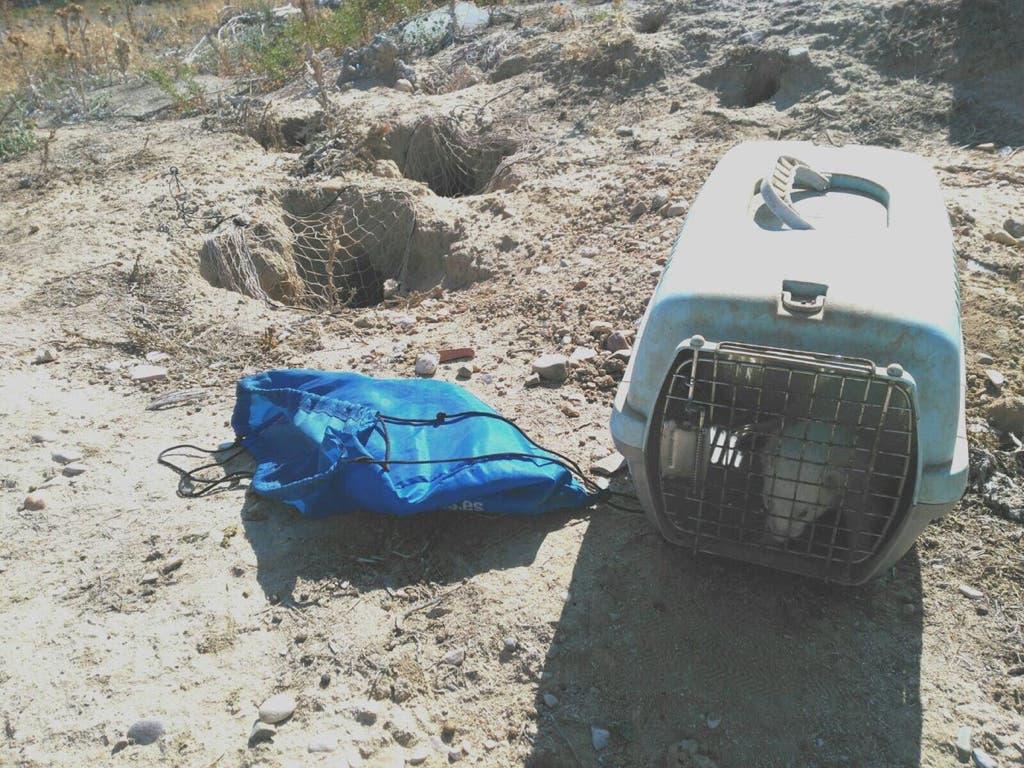 Agentes forestales supervisan en Alcalá la caza de conejos con hurón