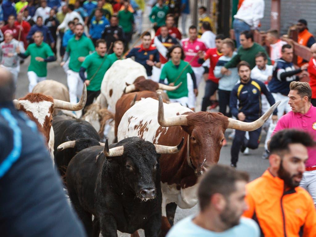 Un herido por asta de toro en los encierros de Guadalajara
