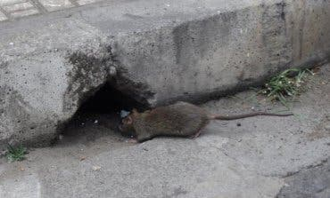 Azuqueca instala un sistema inteligente de control de roedores