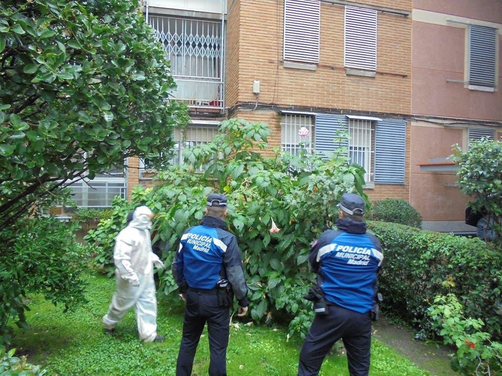 Encuentran 66 plantas de burundanga en el jardín de una urbanización