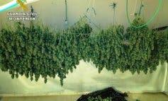 Cuatro detenidos en Guadalajara por tráfico de drogas y cultivo de marihuana