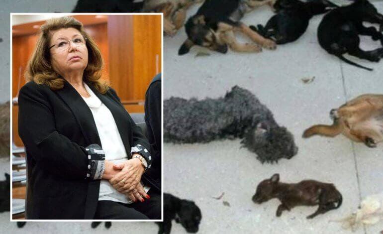 Ingresa en Alcalá-Meco la primera mujer en ir a prisión por maltrato animal