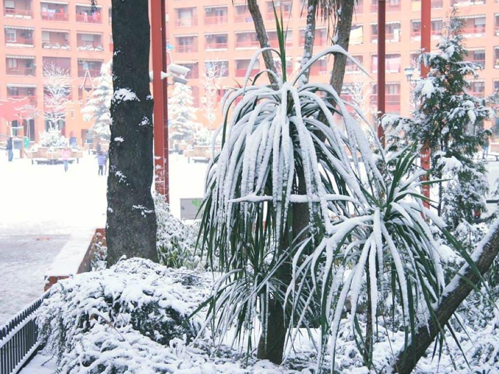 Coslada se prepara para hacer frente a las posibles nevadas