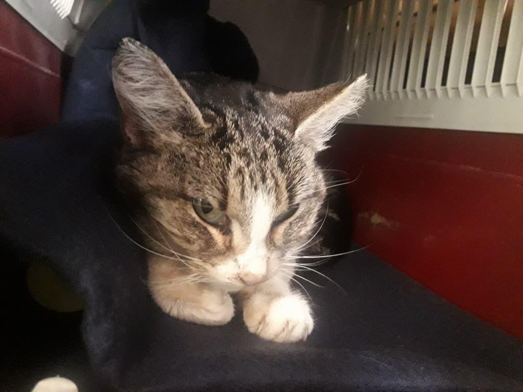 Fatal desenlace para una gata tiroteada en Velilla de San Antonio