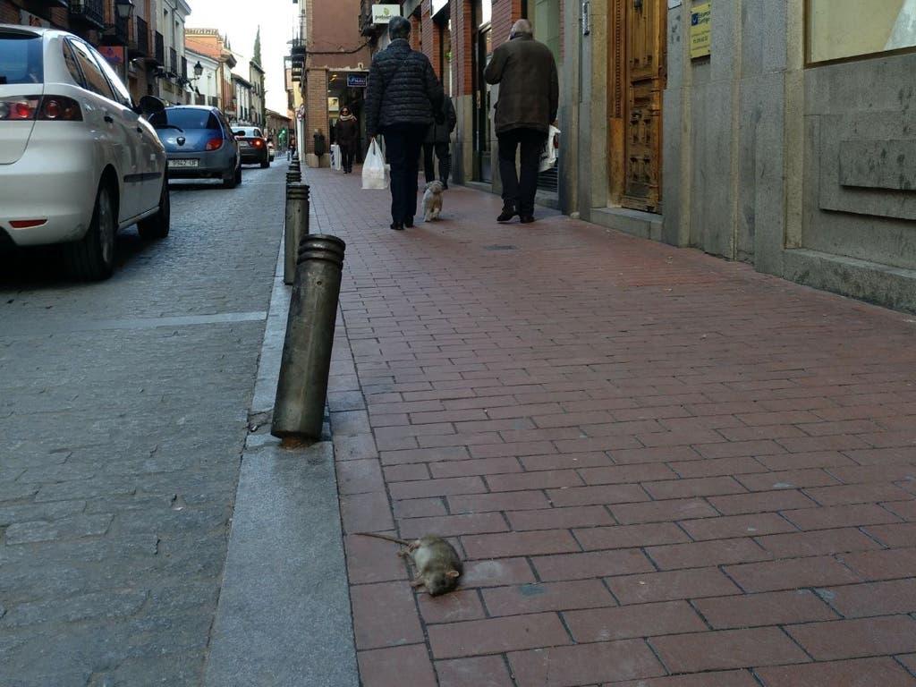 Alcalá de Henares sigue acumulando quejas vecinales por la proliferación de ratas