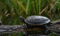 Las tortugas abandonan para siempre el estanque de la estación de Atocha