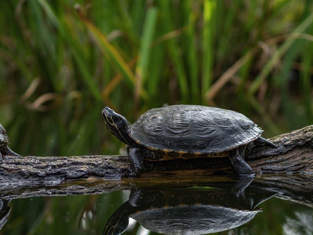 Adiós a las tortugas de Atocha y al estanque que las albergaba