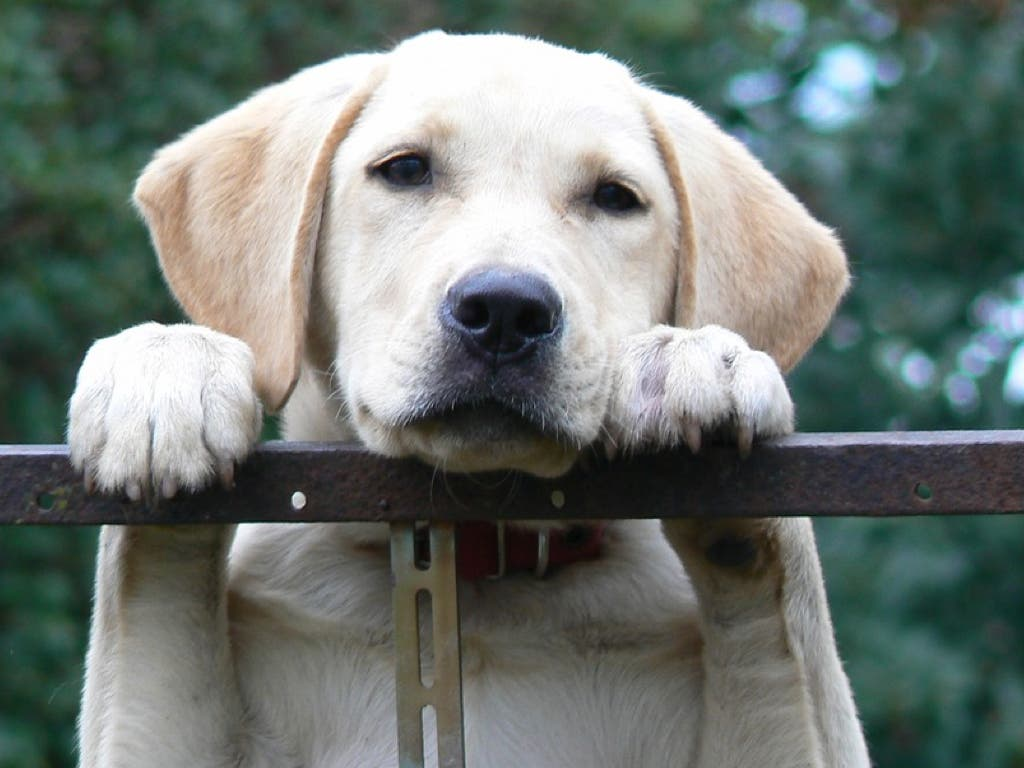 Seis meses de cárcel por tener atado a un perro durante 8 meses